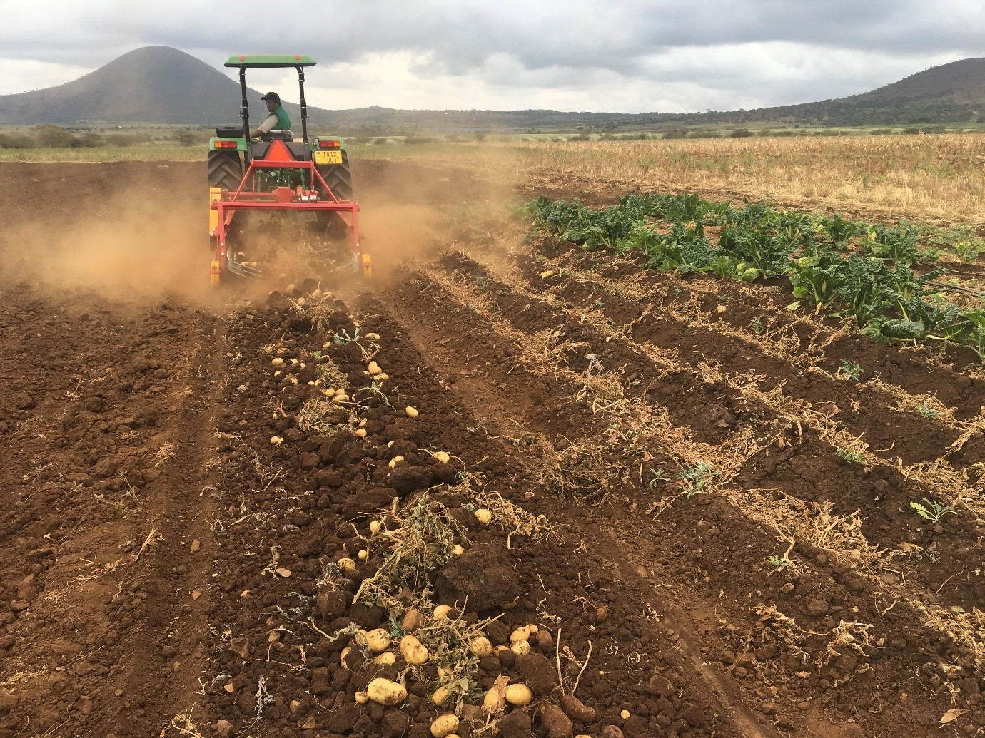 LonAgro Tanzania Rovic Potato Harvester Excels at Onion Harvesting